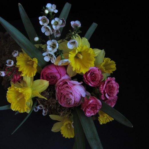 daffodil equinox