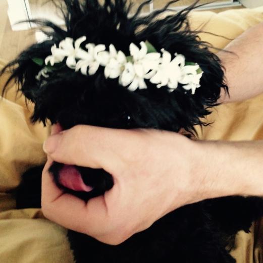 Lil' Hyacinth Crown