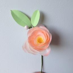 Blush pink camellia