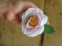 blush purple camellia