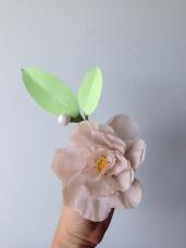 taupe camellia