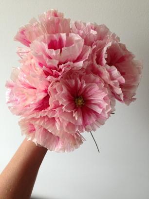 Pink Paper Poppy