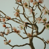 Manzanita Branch with Cherry Blossom