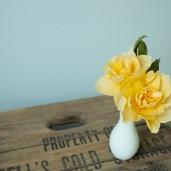 Daffodil Hybids